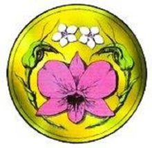 The Albany Orchid Society Logo