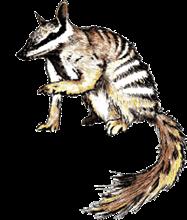 Western Australian Wildlife Rehabilitation Council Inc (WAWRC) Logo